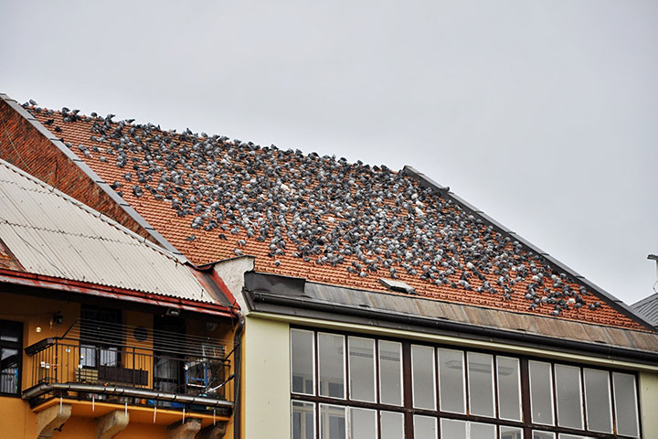A2B Pest Control are able to install spikes to deter birds from roofs in Hammersmith.