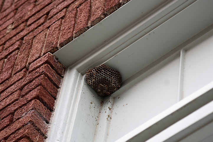 We provide a wasp nest removal service for domestic and commercial properties in Hammersmith.
